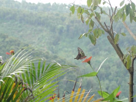 Puri Alam Bali Bungalows: Butterfly watching