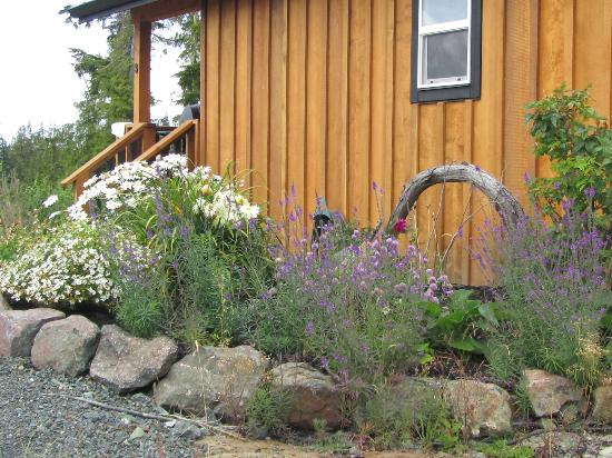 Ecoscape Cabins: My Cabin with the Daisies