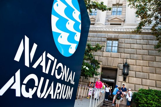 Oldest Aquarium in US Shuts Down – What's Next (if anything) for the National Aquarium?