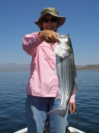 Great striper fishing on lake pleasant picture of the for Lake pleasant az fishing