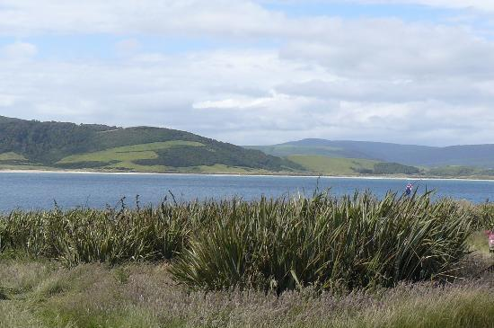 Curio Bay Camp Ground: view (note long grass)