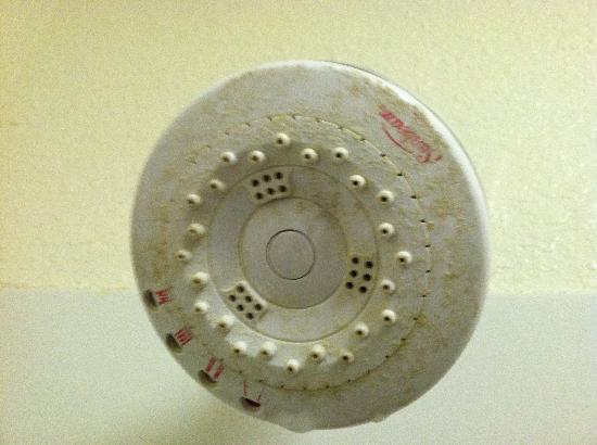 Comfort Inn Kingsland: Shower head