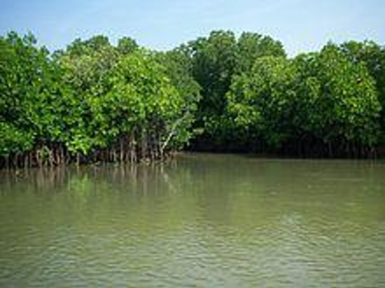 Chidambaram, India: The Mangroves