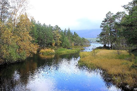 Aviemore and the Cairngorms, UK : Getting close to end of Loch Morlich walk