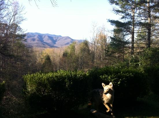 The view from our window at Buckhorn Inn captured with a little critter in the mix!