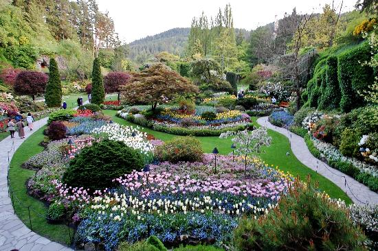 Striking Colours Picture Of Butchart Gardens Central Saanich Tripadvisor