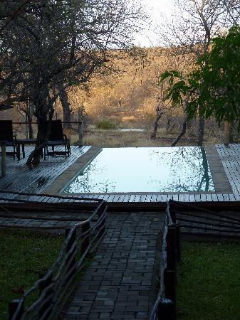 Toro Yaka Bush Lodge: Pool mit Sicht aufs Wasserloch