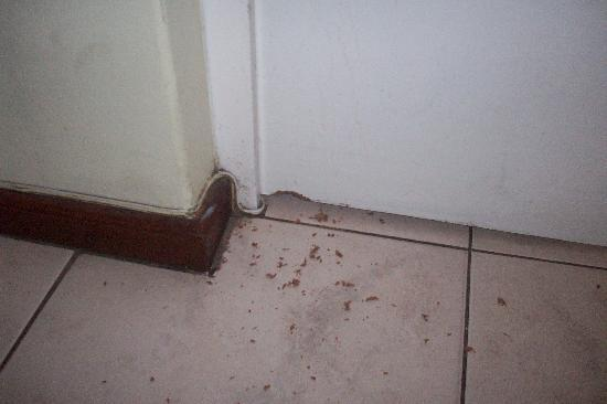 Milnerton, Sudáfrica: Door chewed whilst we were there.