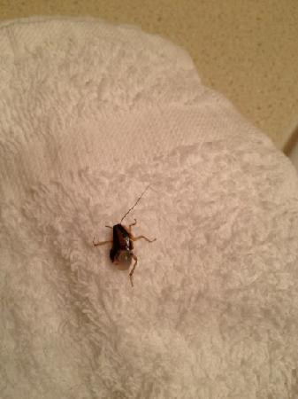 Value Place Tallahassee West: More roaches in the bathroom. Soon as I lifted the towel they scattered! This one didn't make it