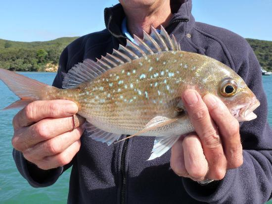 Kawau Lodge & Kawau Island Experience: Look what I caught