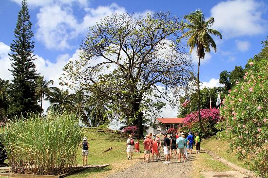 Clement House (Habitation Clement): Beautiful landscape with palms and flowering plants