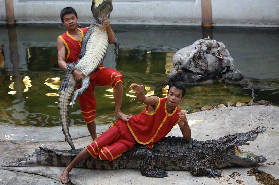 sp8 - Picture of Samutprakan Crocodile Farm and Zoo, Bangkok - TripAdvisor