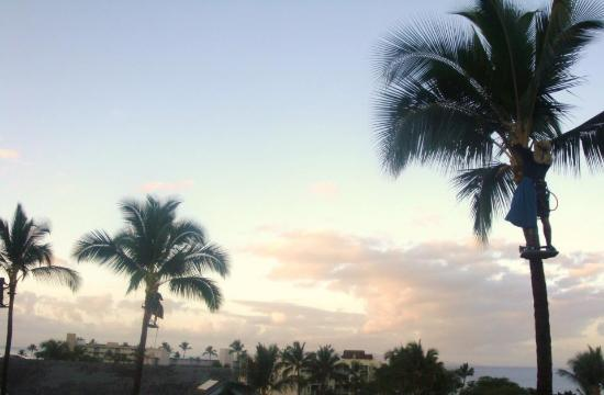 Kamaole Beach Royale Resort: sunset view from our condo