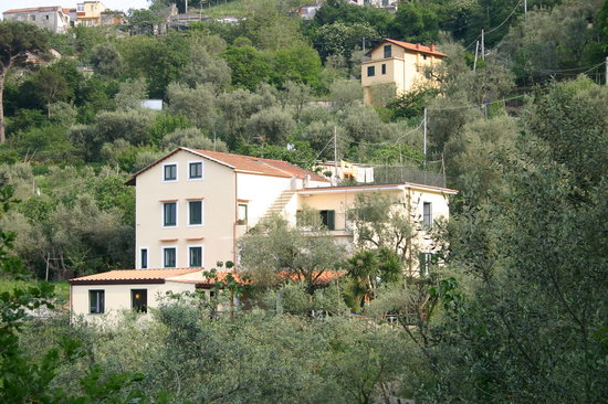 Gli Ulivi