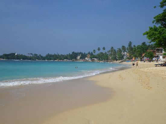 Palm Grove: Unawatuna beach