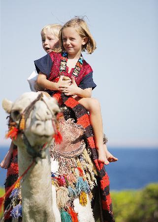 Four Seasons Resort Sharm El Sheikh: Enjoy our Complimentary camels ride