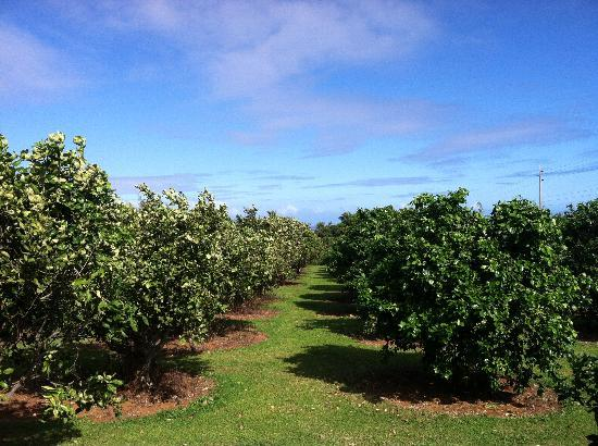 Green Acres Cottages: orchards