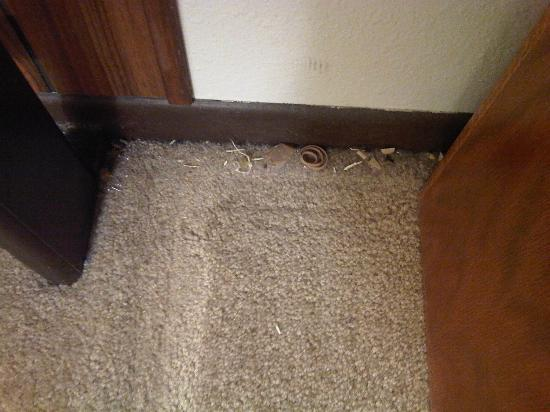 Key to the Rockies: Dirt and droppings in the corners of the bedroom.