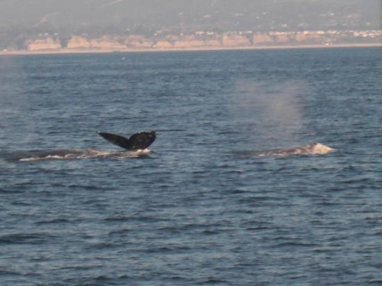 Dana Point, Kalifornia: A Whale of a Tale