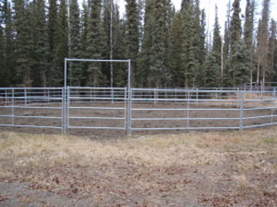 Tok Line Camp Bed & Breakfast: the round pen for our horse guests