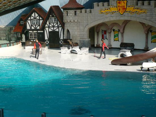 walrus dolphin show picture of marineland niagara falls