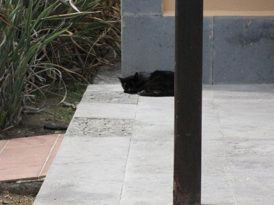 Hotel Dunas Suites and Villas Resort: Villa guard cat!