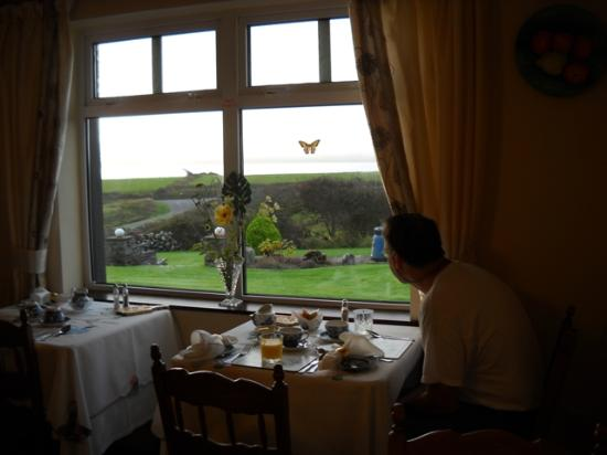 Sea Haven B&B: Morning Tea