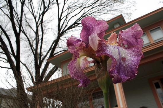 Locust Street Inn: Flower out in front of the Pecan House
