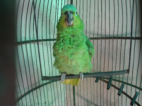 "Hotel El Raizon: on site parrot that says ""hola"""