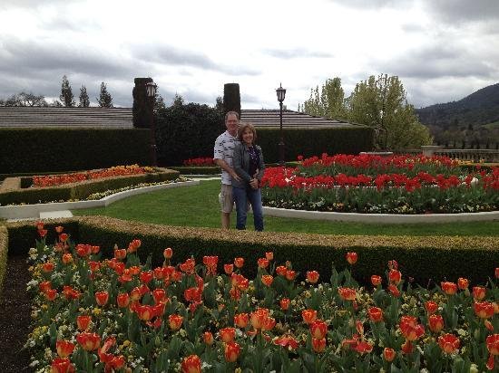 more tulips picture of ferrari carano winery healdsburg. Cars Review. Best American Auto & Cars Review