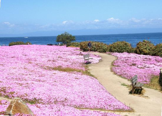 Pacific Grove, CA: A view of the trails