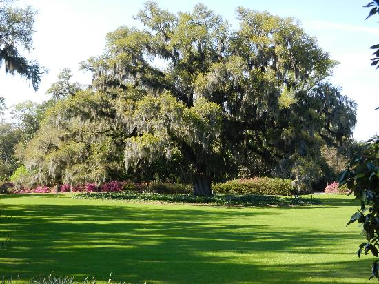 Airlie Oak Picture Of Airlie Gardens Wilmington