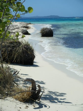 Utila, Honduras: Get on and into the water