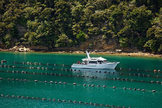 Greenshell Mussel Daily Cruise