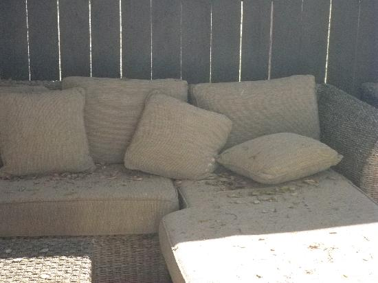 Hummingbird Inn: Dirty patio furnitures with dried leaves