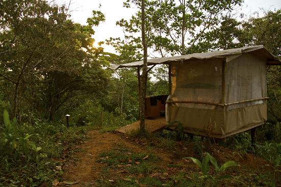 Celvante Jungle Hostel: Cabina no. 3