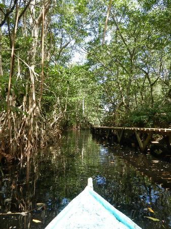 Omega Jungle Lodge: Mangroves