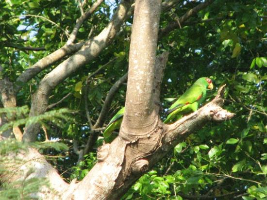 Casa Candiles Inn: Casa Candiles - these two parrots came by twice a day