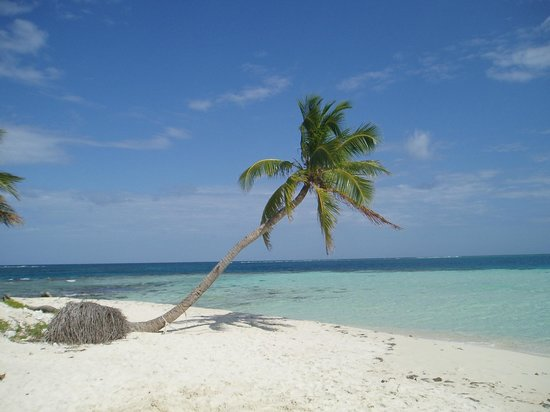 Plasencia, Belize : From Silk Cay -- the ten-palm island 