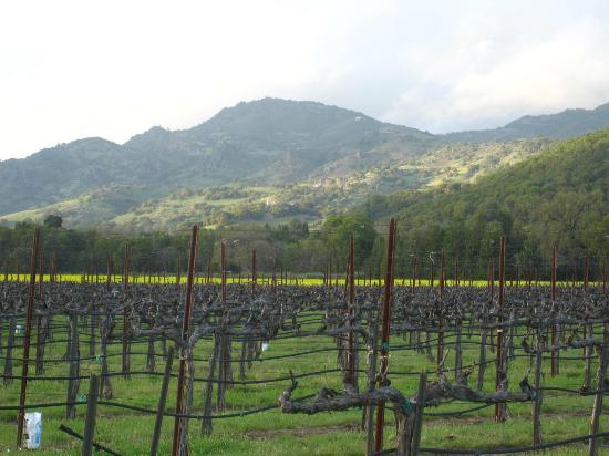 Oak Knoll Inn: Vineyards