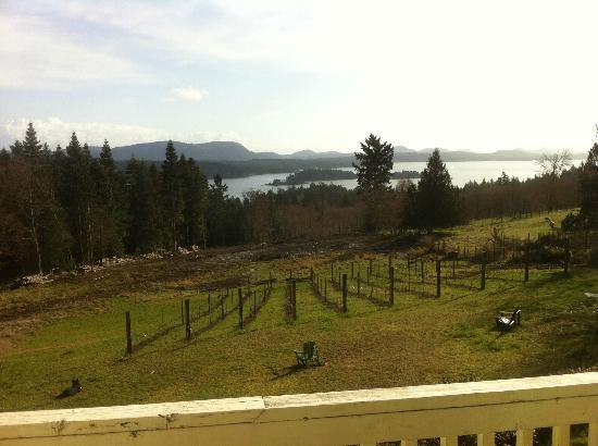 B&B at Salt Spring Apple Company: Overlooking the growing apple orchard