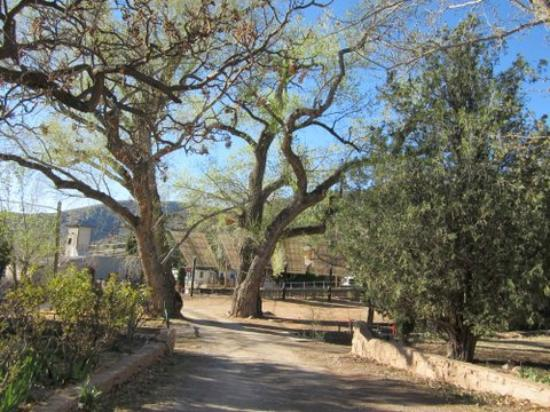 The Gardens At Mile High Ranch: trees at entrance of B&B; you have to drive between them