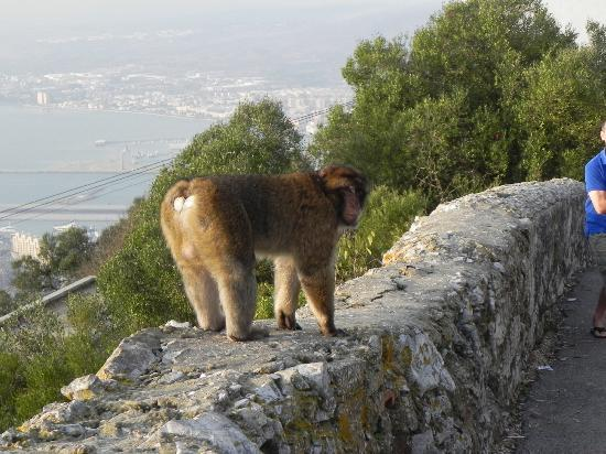 "The Rock of Gibraltar: ""Verfolgungsjagt"""