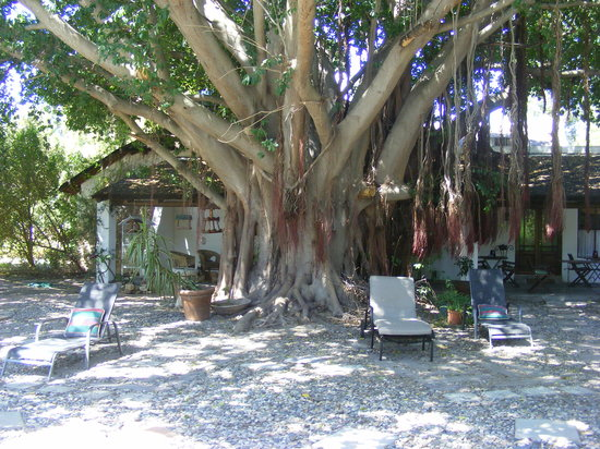 Saint du Barrys: under the big tree