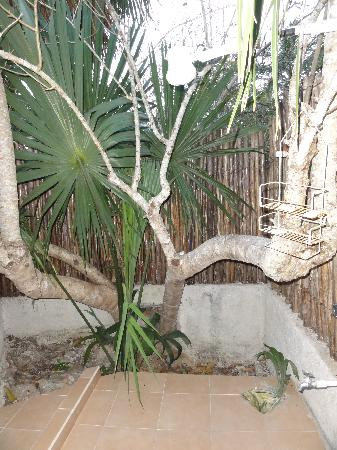Yucatan Mayan Retreat: The outdoor shower
