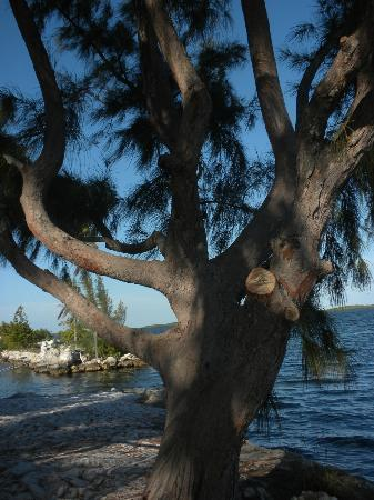 Tarpon Flats: Tree on the spit