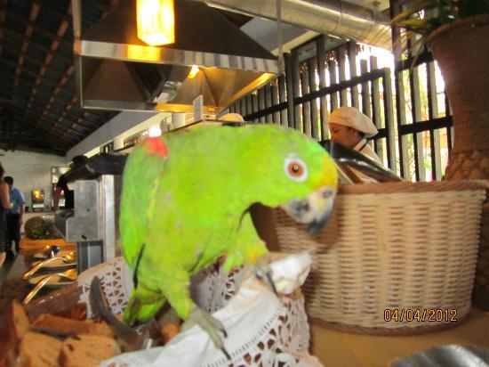 Playa Blanca Hotel & Resort: Pet parrot