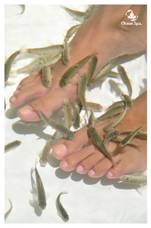 Wonderful ocean adventures punta cana dr fish ocean for Fish pedicure price