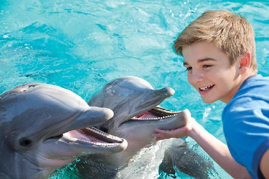 Fairfield Inn & Suites San Antonio SeaWorld/Westover Hills: Dolphine Cove at SeaWorld San Antonio, TX