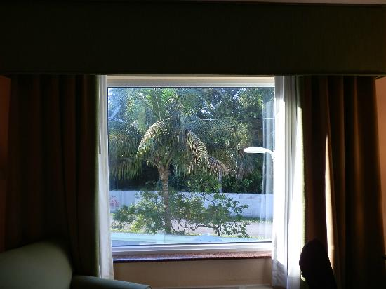 Holiday Inn Express Hotel & Suites Ft. Lauderdale Airport/Cruise: View of a palm tree from our 2nd floor window.